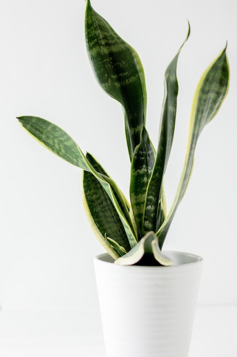 5 Best air purifying indoor plants for tropical Singapore and why plants might not be the best air-purifiers for your home